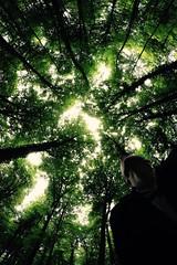 with light (Arnaud Gabriel) Tags: forest fougères fôret france bretagne onf ensp tree arbres