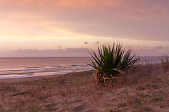 Pure nature @Atlantic coast (Harald Schnitzler) Tags: atlantic france dune sand sunset nature beach agave