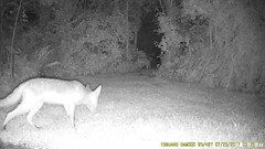TrailCam371 (ohange2008) Tags: essexgarden fox cat july trailcam dogfood peanuts monkeynuts jay