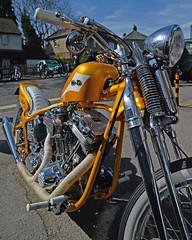Something for the Weekend.. (Harleynik Rides Again.) Tags: hd harley chopper bike gold yellow motorcycle v2 attitudecustoms springer nikondf harleynikridesagain shotawayphotography