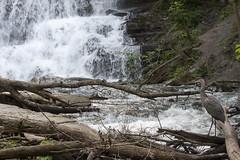 IMG_0210 (zamo86) Tags: nature decew falls niagara st catharines ontario waterfall bird crane