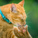 Happiness is having a clean paw! 😸 thumbnail
