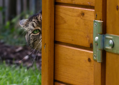 If you think I'll smile for a photo you are up for a surprise ! (FocusPocus Photography) Tags: cleo katze cat chat gato tier animal haustier pet verstecktsich hiding