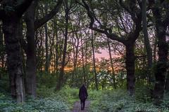 Leeuwenhorstbos (fransvansteijn) Tags: rood