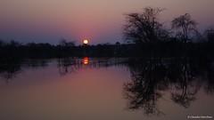 IMGP2354 (Claudio e Lucia Images around the world) Tags: botswana sunset tree sun colors boteti river leroolataudesertanddelta