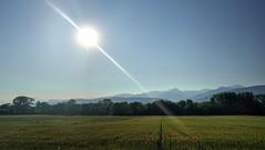 Coquelicots dans la plaine de Chappareillan (yoduc73) Tags: coquelicots champs plaine montagne