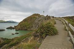Path to a lighthouse (T Ξ Ξ J Ξ) Tags: newzealand wellington castlepoint d750 nikkor teeje nikon2470mmf28