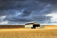 Sixpenny Handley Barn (mpelleymounter) Tags: sixpennyhandley dorset weather clouds storm dutchbarn barn wheat wheatfields crops farming dorsetlandscape dorsetcountryside britishweather shadows markpelleymounter wwwphotomarkscouk evening englishcountryside darkclouds stormbrewing light shade