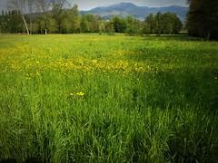 Brianza (memo52foto) Tags: brianza lombardia lombardy lombardie lombardei italia italy italie italien