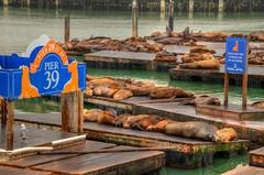 Pier 39 Sea Lions (ap0013) Tags: san francisco sanfrancisco california sanfranciscocalifornia sanfranciscoca pier39 sea lion lions pier 39 sealion sealions seal seals animal dock boat bay sanfranciscobay