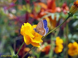 Königliche Garten Akademie Berlin  Besuch eines Schmetterlings