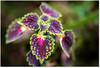 Looking Close (Sigpho) Tags: sigpho nikon nice flowers plants
