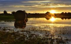 Nach dem Unwetter (AndyW Harz) Tags: sonnenuntergang sunset spiegelung reflection flut feld field unwetter harz germany deutschland sachsenanhalt