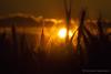#atardecer #sunset #sol #sun #rayosdesol #sunrays #nubes #clouds #cielo #sky #heaven #2016 #málaga #andalucía #españa #spain #love #contraluz #backlighting #naturaleza #nature #paisaje #landscape #photography #photographer #sonyimages #sonyalpha #sonyalph (Manuela Aguadero PHOTOGRAPHY) Tags: landscape españa sol clouds 2016 sonya350 sonyimages andalucía nature sun spain sunset backlighting rayosdesol atardecer photography sky nubes sonyalpha sonyalpha350 contraluz cielo paisaje love sunrays heaven photographer alpha350 naturaleza málaga