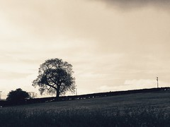Newgrange, Co. Meath, Ireland (Andrés Bentancourt) Tags: ireland newgrange eire county meath monocromático monochrome outdoors landscapes tree nature blackandwhite vacations travel traveling wanderlust