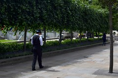 2017-06-11: Line Of Trees (psyxjaw) Tags: london londonist sunday walk sun stpauls stpaulscathedral cathedral man waistcoat bowlerhat city helper cityoflondon