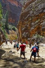 Like Mall Walking (Edna Winti) Tags: ednawinti utah zionnationalpark hiking virginriver thenarrows crowds