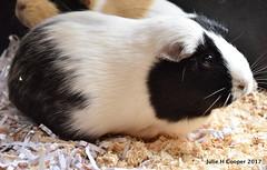 Alice (juliehcooper) Tags: guinea