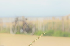 Fading (eleni m (busy remodeling house)) Tags: fading straw fence beach sea sky dof bike grass quote outdoor song joni mitchell summer afternoon blur warm sunny 50mm f14