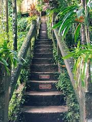 Grand Staircase, Paronella Park. (stephenk1977) Tags: australia queensland qld cairns innisfail paronellapark menafalls grand staircase iphone vsco