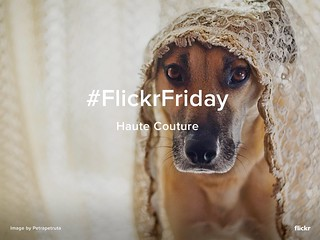Flickr Friday - Haute Couture