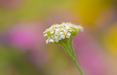 Your happy future (lkiraly72) Tags: happyfuture happy colorful plant bokeh optimism