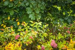 Мокрый сад DSC_8052 (andrey.salikov) Tags: 180550mmf3556 8004919657 b704 bonnyrigg dalhousiecastle eh193jb magnifique nikond60 scotland atrevida beautiful buenisima colour colourfulplaces dreamscene europe fantastic fantasticcolors fantasticplaces foto free goodatmosphere gorgeous harmonyday2017 harmonyvision impressive light lovely moodshot nice niceday niceimage niceplace ottimo peacefulmind photo places relaxart scenery sensual sensualstreet streetlight stunning superbshots tourism travel trip wonderful шотла́ндия отпуск туризм