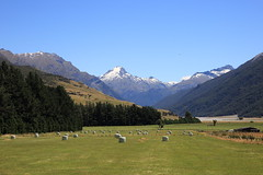 Couldn't Resist - (Explored) (Kilfenora Kev) Tags: alps makarora snow peaked rural canon 5d hay bales new zealand summer