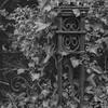 Door - Film Hasselblad (Photo Alan) Tags: blackwhite black blackandwhite ivy carlzeissplanar80mmf28 carl zeiss hasselblad hasselblad503cw kodak100 film filmcamera filmscan filmstreet film120 selfdeveloping plant door