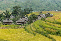 _Y2U0335.0915.Cao Phạ.Mù Cang Chải.Yên Bái (hoanglongphoto) Tags: asia asian vietnam northvietnam northeastvietnam landscape scenery vietnamlandscape vietnamscenery vietnamscene village homes house mountainvillagesceneryinvietnam terraces terracedfields harvest valley flanksmountain canon canoneos1dx canonef70200mmf28lisiiusmlens tâybắc yênbái mùcangchải caophạ thunglũng thunglũngcaophạ bảnlàng nhữngngôinhà sườnnúi ruộngbậcthang lúachín mùagặt ruộngbậcthangmùcangchải mùcangchảimùagặt mùcangchảimùalúachín