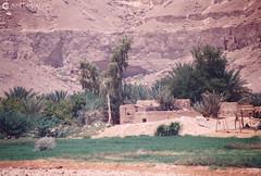 199909 Yemen Hadramaut (76) (Nikobo3) Tags: asia orientemedio arábiga arabia penínsulaarábiga yemen hadramaut desierto desiertoramlatassabatayn culturas travel viajes fujicolorsuperia100iso película nikobo joségarcíacobo urban street nikon nikonf70 f70 sigma70300456