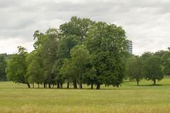 IMGP3561.jpg (Zeilenende) Tags: baumgruppe rosensteinpark stuttgart baum stuttgartnord
