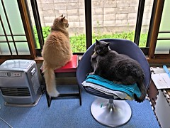 One Window with Two Cats (sjrankin) Tags: 22july2017 edited animal cat norio yuba hdr yubari hokkaido japan backyard window chair stool