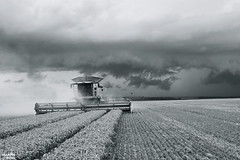 Last Row Before The Storm | CLAAS (martin_king.photo) Tags: wheatharvest 2017harvestseason 2017 wheat harvest highlands region clouds cloudyday harvesttime harvest2017 claaslexion780apshybrid claasvario1050header claasvario1050 claas claaslexion combineharvester summerwork tschechischerepublik powerfull martin king photo machines strong agricultural greatday great czechrepublic welovefarming agriculturalmachinery farm workday working modernagriculture landwirtschaft martinkingphoto moisson machine machinery bwphoto blackandwhite bw epic epicclouds beforethestorm stormiscoming hurryup