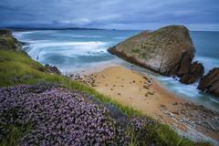 Seascape 2 (roberrodriguez1) Tags: mar olas flores costa playa cielo rocas paisaje marino sea rocks sand flowers waves sky blue spain cantabria españa seascape flickrtravelaward
