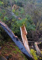 420BrokenTree (sophoryth) Tags: arbol recuerdos tree regards break quebrado broken