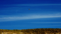 sky (Darek Drapala) Tags: sky skyskape blue birds bird color nature baltic sea seashore panasonic poland polska panasonicg5 lumix light