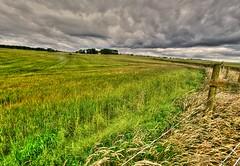 Having a field day (Phelan (Shutter Clickin) Goodman) Tags: fields moody sky aberdeenshire scotland panasonic gx80