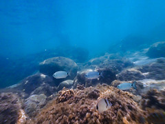 Subacquea (ilsiciliano_) Tags: action cam subacquea photo fish foto mongerbino fondale palermo animale animal pesci blue sea ocean sicilia