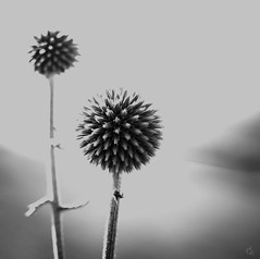 BW mirage in the desert (Ichi De) Tags: bw blackandwhite nature manualfocus monochrome desert mirage meyeroptik görlitz trioplan 50mm f29 ball