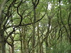 Sessile Oak Woodland, Inchcailloch, Stirling, Scotland, 26 July 2017 (AndrewDixon2812) Tags: sessile oak wood trees inchcailloch island loch lomond balmaha stirling scotland