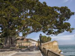 """El Arbol que queria ser Marinero"" (Cadiz III). ""The tree that wanted to be a sailor"" (Cadiz III). (Capuchinox) Tags: arbol tree cadiz andalucia andalusia spain españa mar sea cielo sky naturaleza nature azul verde hdr nik olympus costa coast"