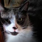 Fabulous Feline thumbnail