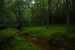 Little Creek (dzmears) Tags: water forest park creek grass tree trees log peaceful