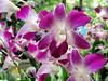 The Joy (Khaled M. K. HEGAZY) Tags: nikon coolpix p520 malaysia kualalumpur perdanabotanicalgardens orchidgarden nature outdoor closeup macro orchid plant flower petal foliage garden green yellow blue white violet purple