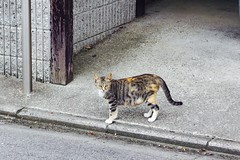 Today's Cat@2017-07-27 (masatsu) Tags: cat thebiggestgroupwithonlycats catspotting pentax mx1