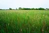 Belle Marsh Reeds (freewalkers) Tags: boston eastboston reverebeach summer