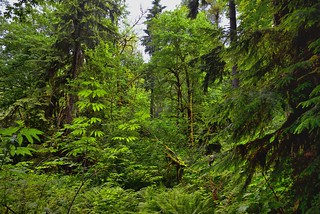 The Vibrant Greens of a Forest