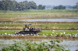 suphan buri - thailande 11
