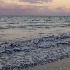 (Lucia Cysneiros) Tags: entardecer endofafternoon praia beach brasil pernambuco